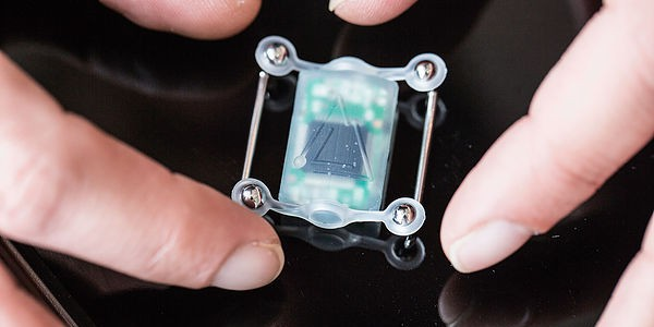 Cyborgs: der Kompass-Sinn für den Menschen